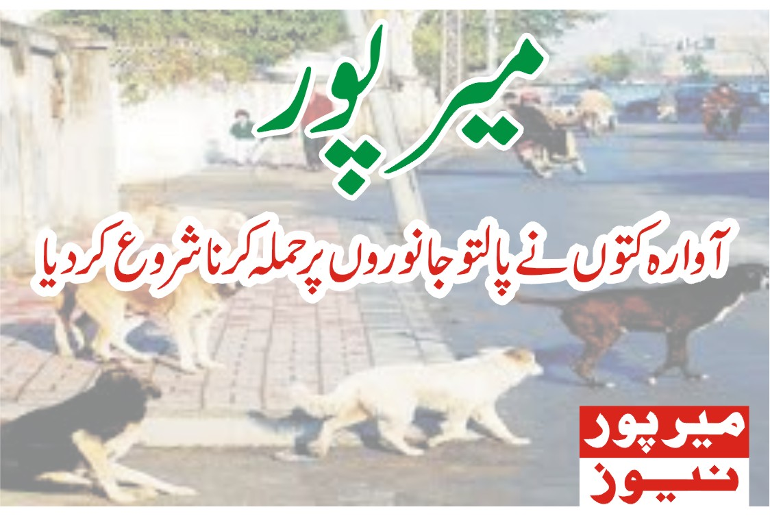 Stray dogs began attacking pets